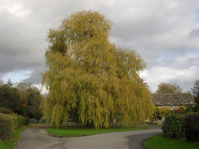 the willow tree - eastleach