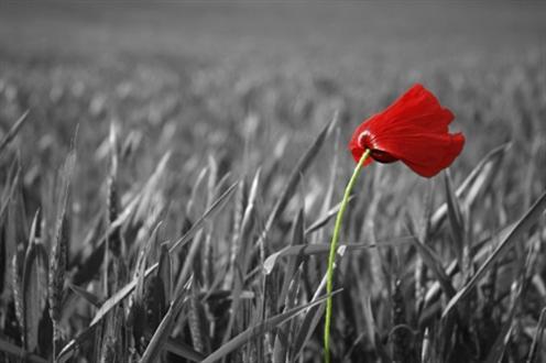 remembrance_day_poppy eatleach