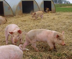 eastleach downs organic farm - eastleach village - gloucestershire 2015
