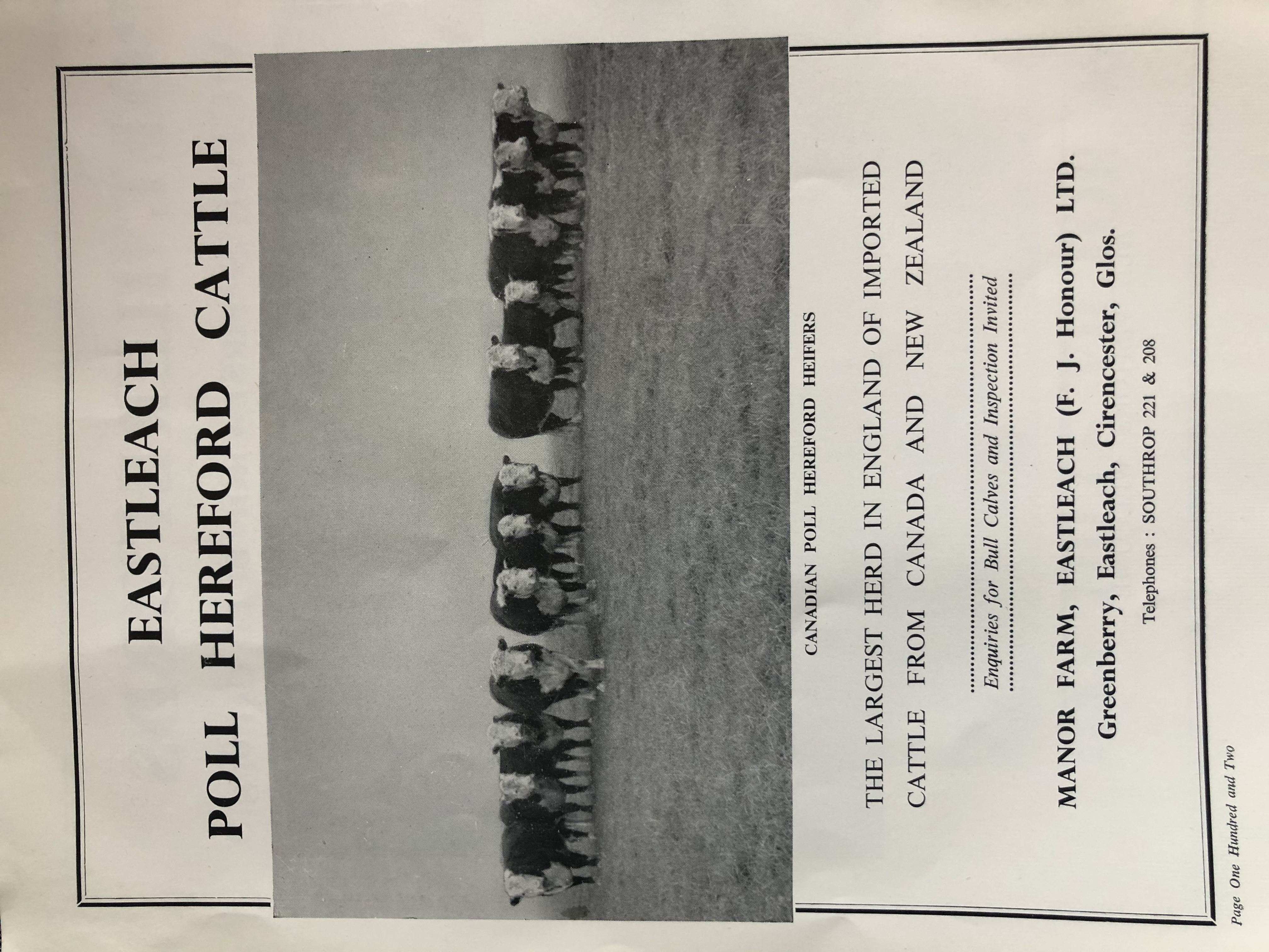 """Found this advert from 1958 for """"The largest herd in England of imported cattle from Canada and New Zealand"""" to be found in Eastleach."""