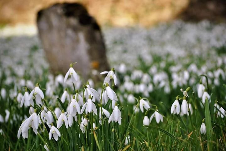 The world may never noticeIf a Snowdrop doesn't bloom,Or even pause to wonderIf the petals fall too soon.