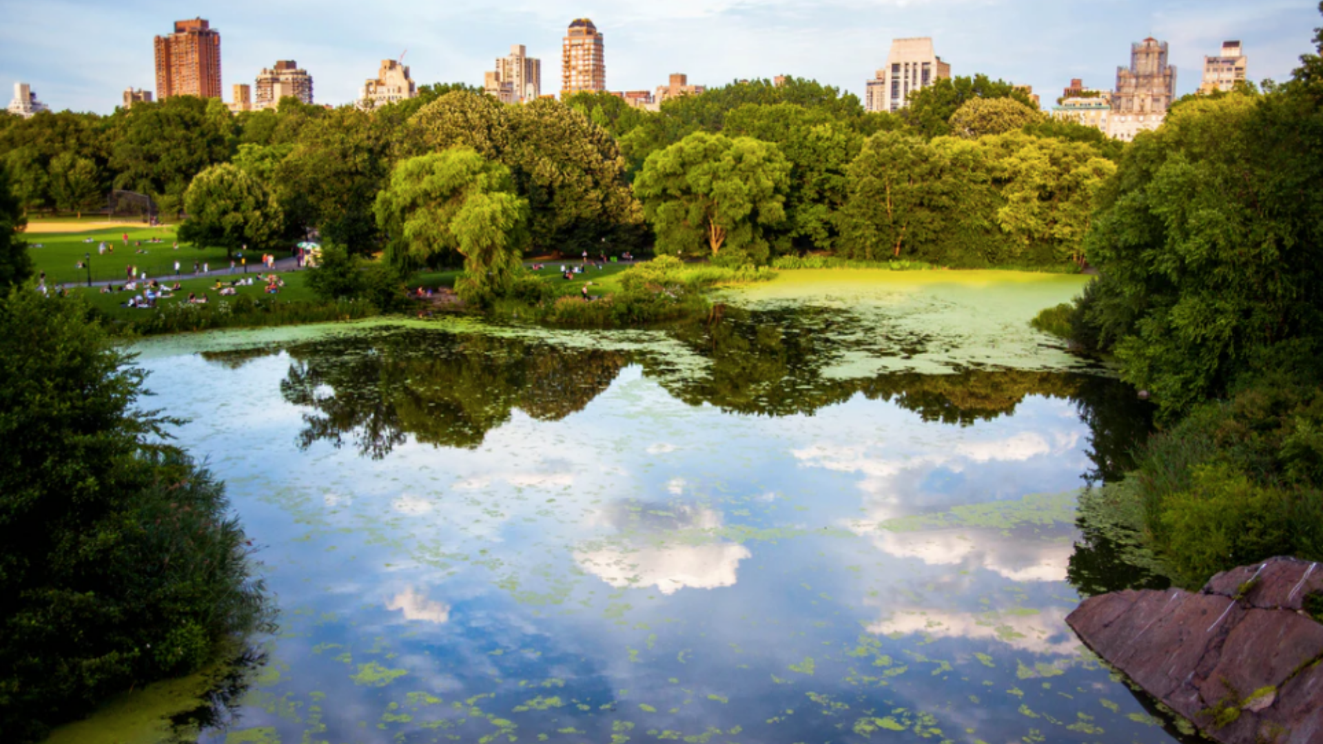 Central Park thrive at Home