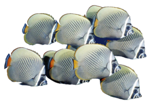 school_of_fish_png_by_mysticmorning-d4twsyv