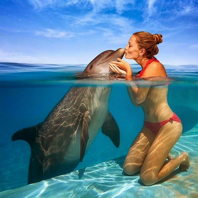 Neptune in Pisces: Talking Dolphins