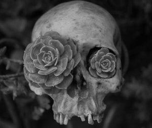 skull-e088d60adc98cf26652570e8160486ee_h