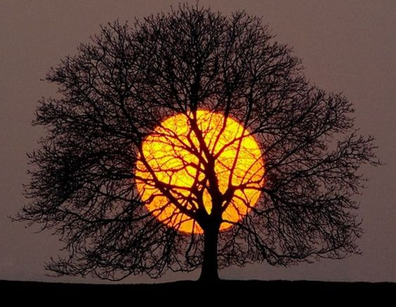 Sun 4th House: Deep Roots – Necessary Foundations of Life?