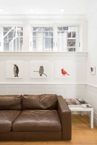 couch-bird-art-walter
