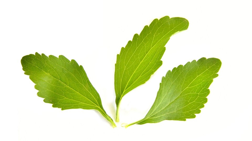 Everything You Should Know About Stevia