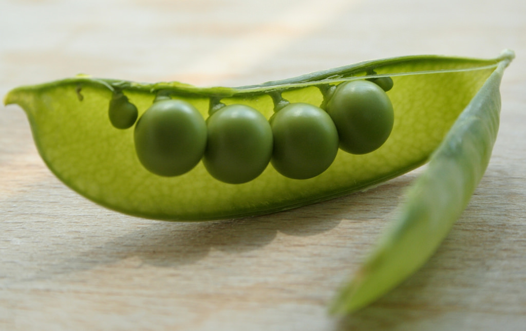 What Is Pea Protein And Why Does It Matter To Your Workout?
