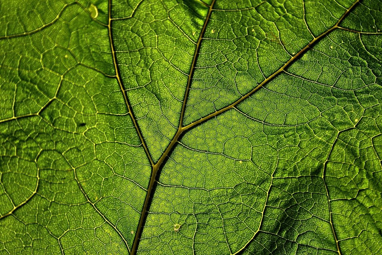 Your Complete Guide To Boswellia Serrata