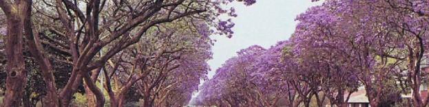 harare Zimbabwe weather