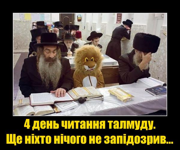 Приколи в синагозі. Сидить людина в костюмі лева. 4 день читання талмуду. Ще ніхто нічого не запідозрив...