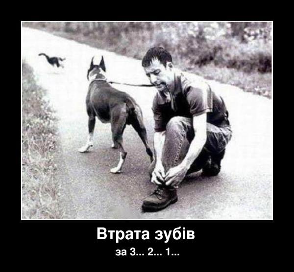 Хлопець тримає зубами собаку на повідку. І тут собака побачив кота. Втрата зубів через 3, 2, 1
