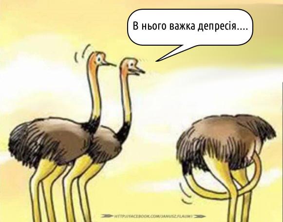 Прикол про страусів. Стоять два страуси і дивляться на третього, який запхав голову собі в дупу. Один каже: - В нього важка депресія...