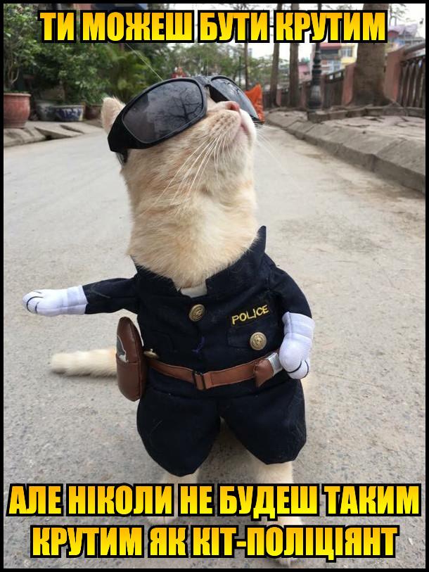 Ти можеш бути крутим, але ніколи не будеш таким крутим як кіт-поліціянт