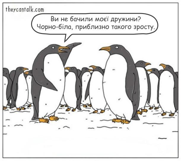 Смішний малюнок про пінгвінів. Зграя пінгвінів. Один пінгвін питає іншого: - Ви не бачили моєї дружини? Чорно-біла, приблизно такого зросту.