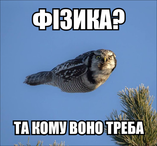Прикол. Сова і закони фізики. Летить сова не розмахуючи крилами. Фізика? Та кому воно треба!