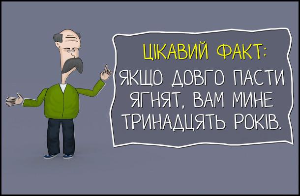 Смішний вислів про Шевченка. Ціквавий факт: якщо довго пасти ягнят, вам мине тринадцять років.