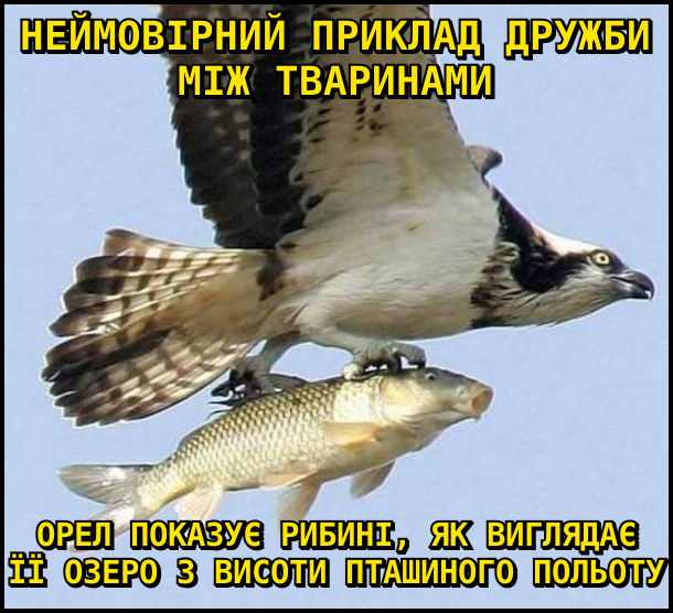 Неймовірний приклад дружби між тваринами: орел показує рибині, як виглядає її озеро з висоти пташиного польоту. На фото: орел летить і в кігтях тримає рибину