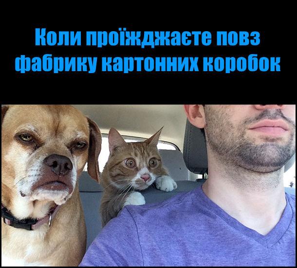 Прикол Троє в авто. Коли проїжджаєте повз фабрику картонних коробок. На фото: в авто їдуть господар, пес і кіт. Кіт дивиться, витріщивши очі