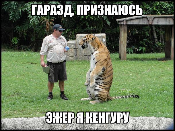 Прикол про тигра. Тигр стоїть на задніх лапах. До нього підійшов служитель зоопарку. Лев: - Гаразд, признаюсь, зжер я кенгуру