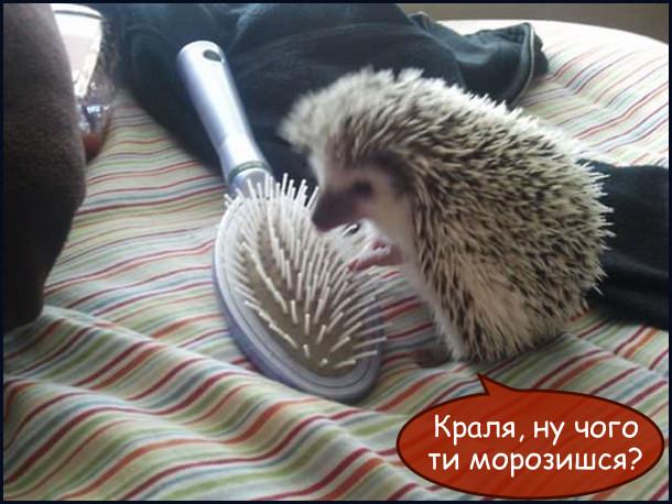 Їжачок дивиться на масажний гребінець, який доволі схожий на нього і каже: - Краля, ну чого ти морозишся?