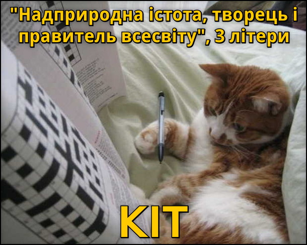 Кіт розгадує кросворд: Надприродна істота, творець і правитель всесвіту, 3 літери... Кіт!