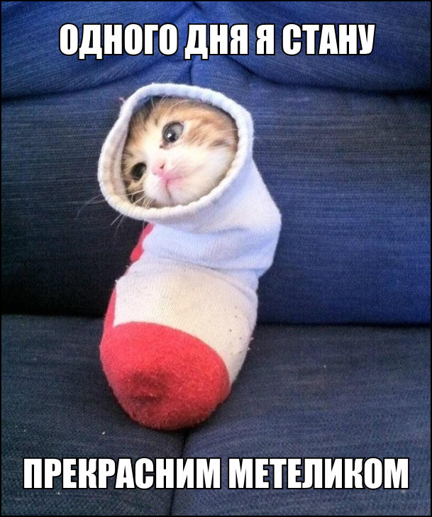 Кошеня залізло в шкарпетку, тільки голова тирчить. Думає: Одного дня я стану прекрасним метеликом