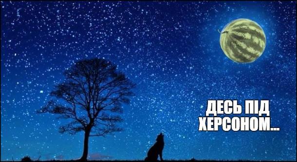 Десь під Херсоном вночі вовк виє на місяць-кавун