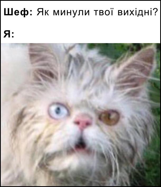 Шеф: Як минули твої вихідні?  Я: (фото запатланого кота з диким виразом обличчя і очами різного коьору)