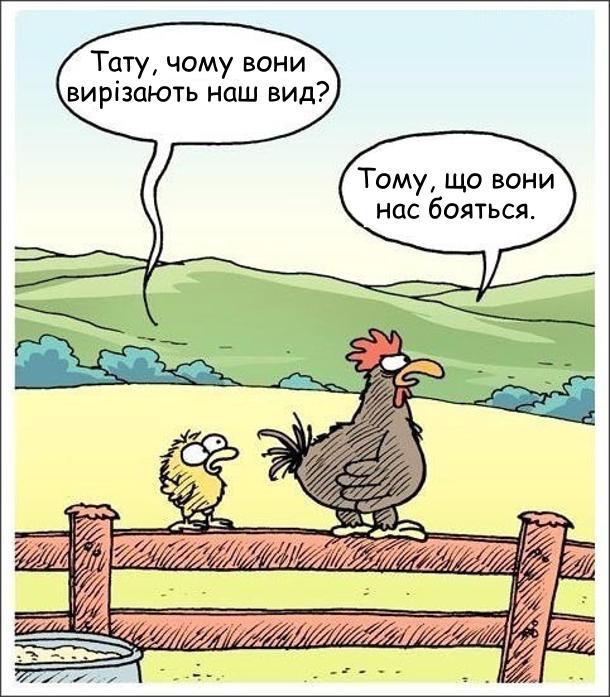 На плоті сидять півень і курча. Курча: - Тату, чому вони вирізають наш вид? - Тому, що вони нас бояться.