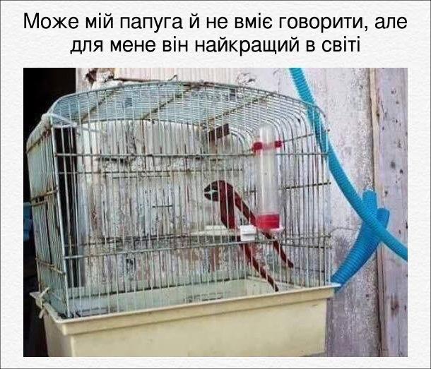 Може мій папуга й не вміє говорити, але для мене він найкращий в світі. На фото: пташина клітка і якій розвідний ключ для труб