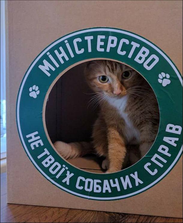Ідеальний будинок для кота. Картонна коробка з круглим отвором і надписом Міністерство не твоїх собачих справ