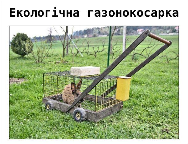 Екологічна газонокосарка. Пересувна клітка з кролем