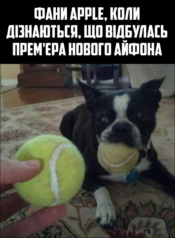 Фани Apple, коли дізнаються, що відбулась прем'єра нового Айфона. Собака з тенісним м'ячиком в роті, із заздрістю дивиться на інший м'ячик, який йому показують