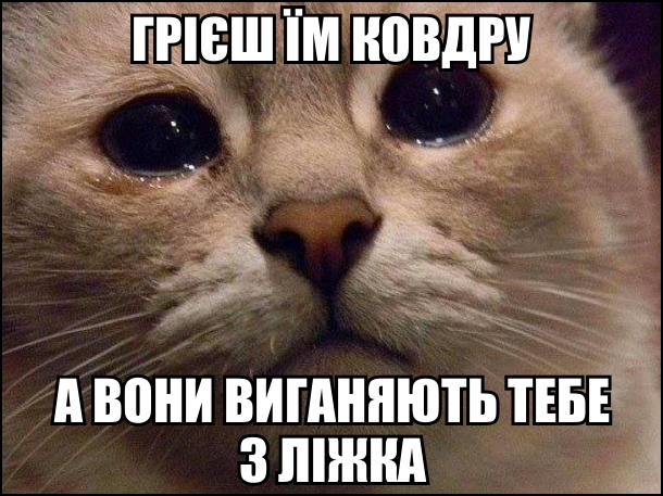 Кіт зі сльозами на очах. Грієш їм ковдру, а вони виганяють тебе з ліжка