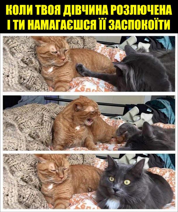 Коли твоя дівчина розлючена і ти намагаєшся її заспокоїти. Два коти (чи кіт і кицька, чи дві кицьки). Один намагається грати, а інший зашипів на нього