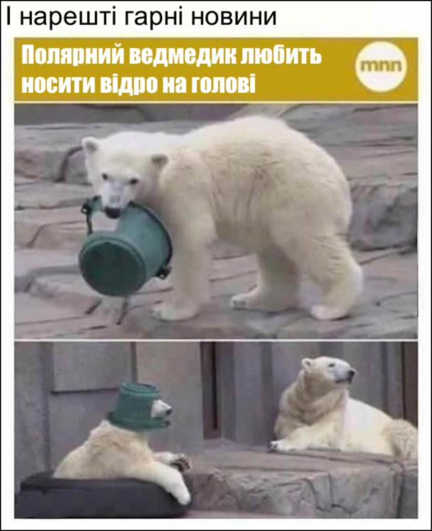 І нарешті гарні новини: Полярний ведмедик любить носити відро на голові