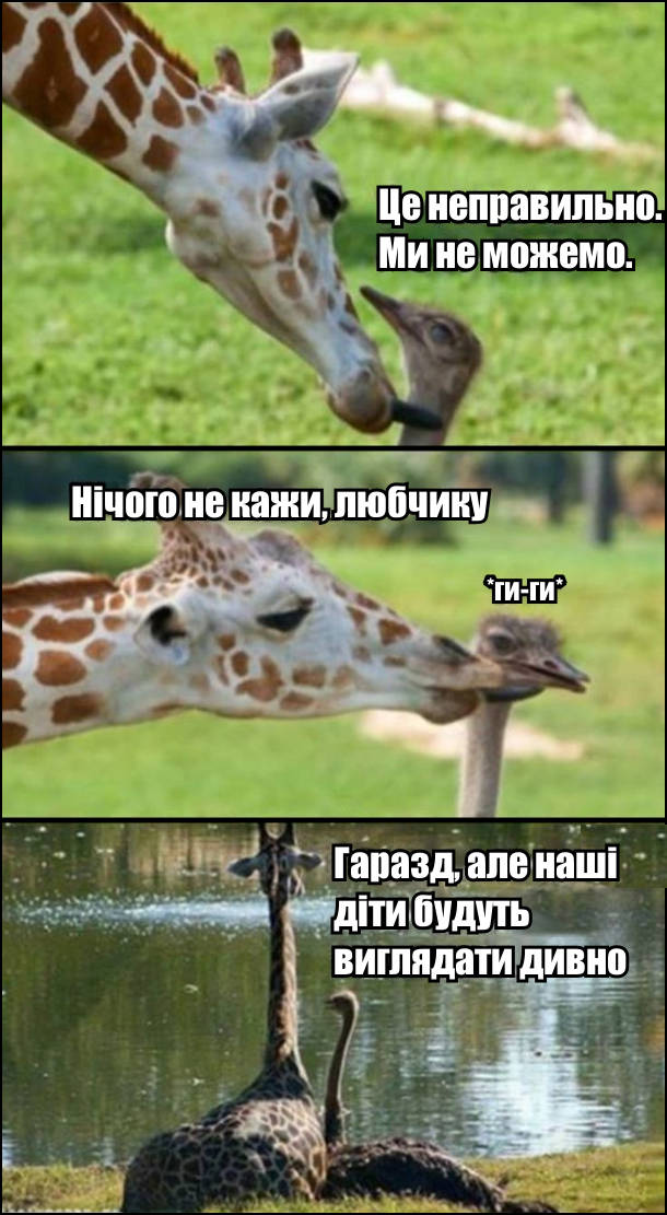 Страус: - Це неправильно. Ми не можемо. Жирафа, облизуючи страуса: Нічого не кажи, любчику. Страус: - Ги-ги. Згодом вони сіли на березі, страус і каже: - Гаразд, але наші діти будуть виглядати дивно