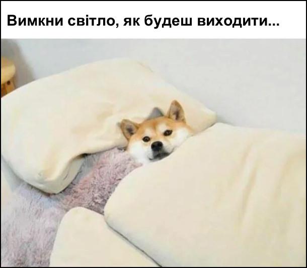 Пес лежить на ліжку під ковдрою: Вимкни світло, як будеш виходити