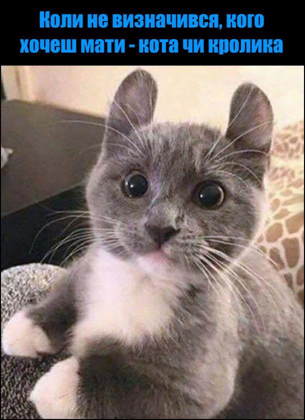 Коли не визначився, кого хочеш мати - кота чи кролика. На фото: кіт з кролячими вухами