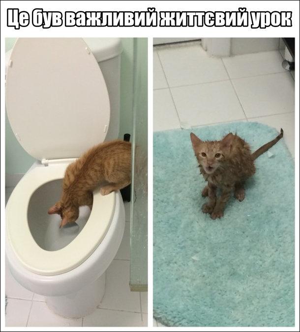 Кіт хотів напитися з унітазу але впав туди і виліз весь мокрий. Це був важливий життєвий урок