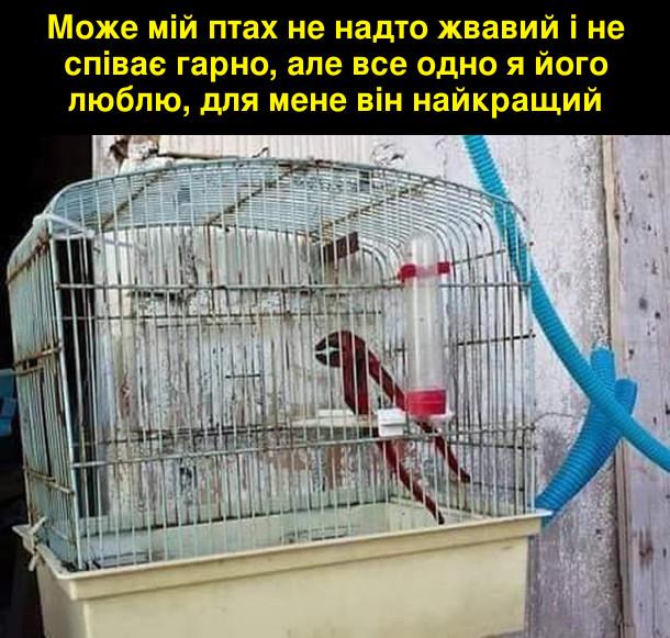 Може мій птах не надто жвавий і не співає гарно, але все одно я його люблю, для мене він найкращий. На фото: в пташиній клітці розвідний ключ для труб