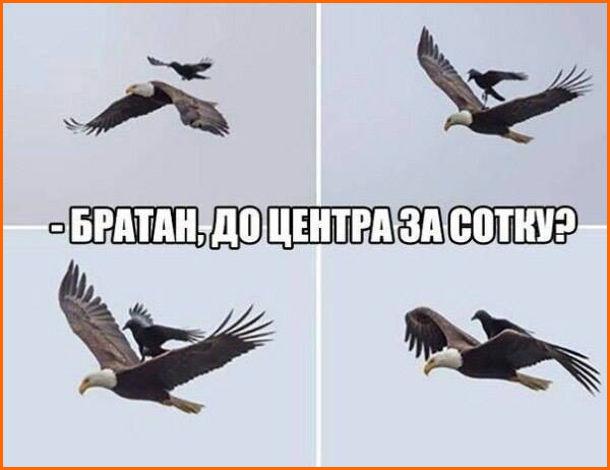 Прикол про орла. Летить орел до нього підлітає інший птах і сідає йому на спину. - Братан, до центра за сотку?