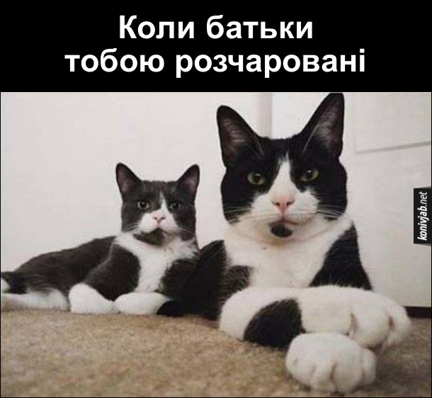 Коли батьки тобою розчаровані. Два серйозні коти