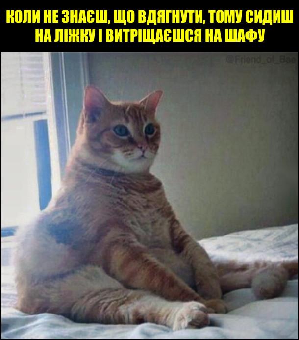 Коли не знаєш, що вдягнути, тому сидиш на ліжку і витріщаєшся на шафу. Товстий кіт сидить на ліжку