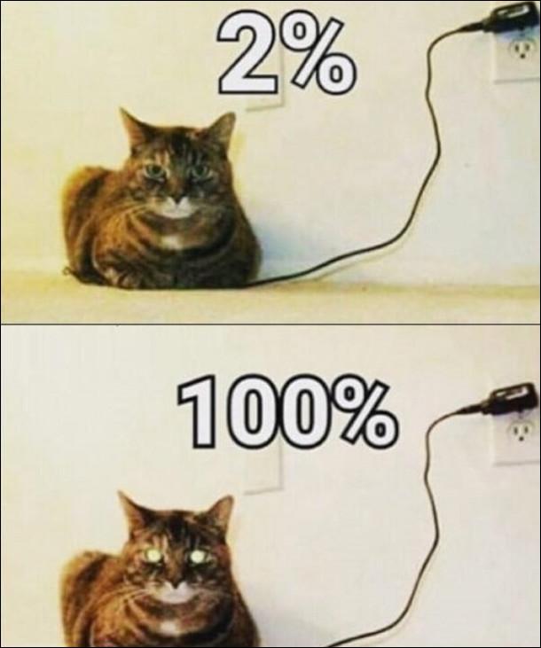 Заряджання кота. Кіт сів на провід від зарядки і здається неначе це кіт заряджається. 2% - кіт сидить нормально, 100% - в кота засвітилися очі