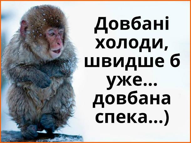 Жарт про холоднечу. Мавпочка мерзне на морозі. Довбані холоди, швидше б уже... довбана спека...)