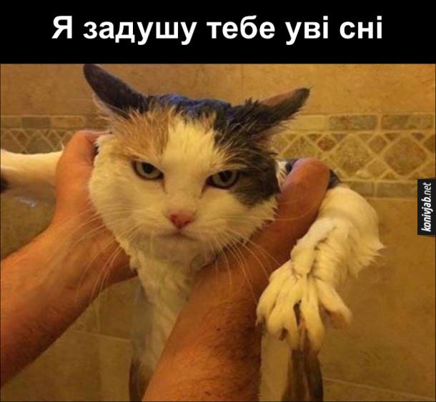Коли покупав кота. Мокрий кіт злим поглядом дивиться: - Я задушу тебе уві сні