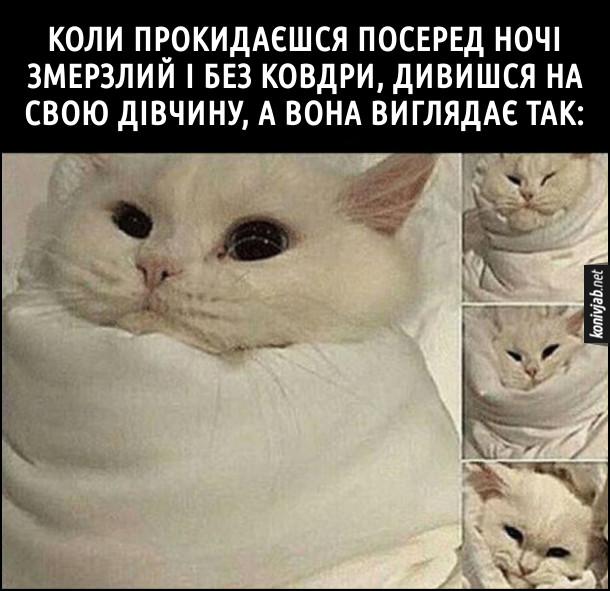 Прикол. Дівчина забрала ковдру. Коли прокидаєшся посеред ночі змерзлий і без ковдри, дивишся на свою дівчину, а вона виглядає так: кіт закутаний у ковдру